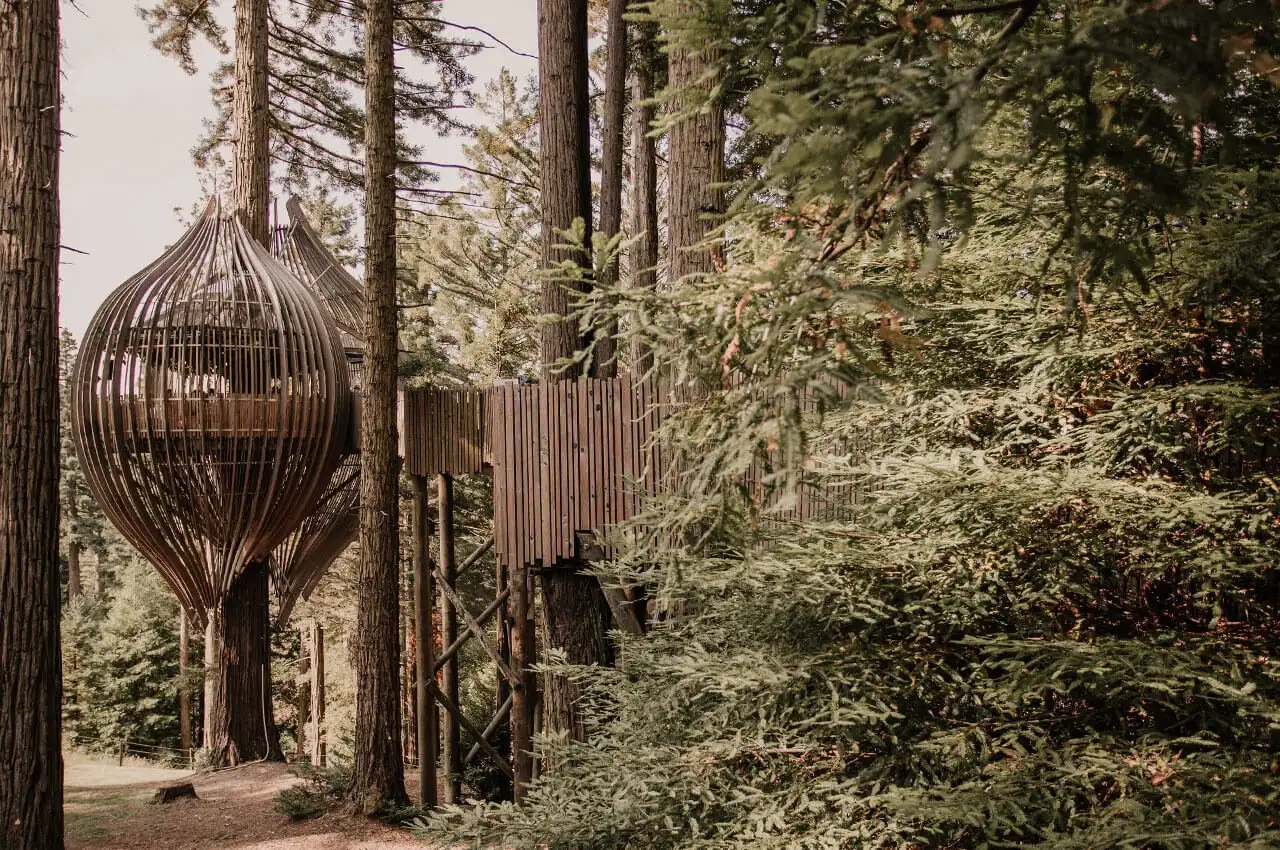 Treehouse restaurant ideas